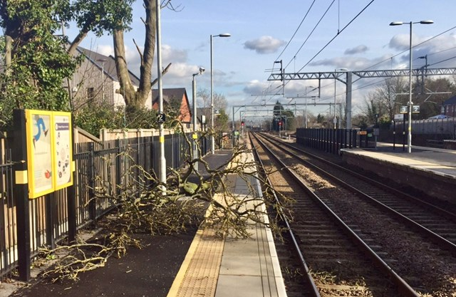 Careless tree-fellers let large branches crash onto railway narrowly missing power lines: Branches on the platform after the main bough was cleared from the tracks at Roby station
