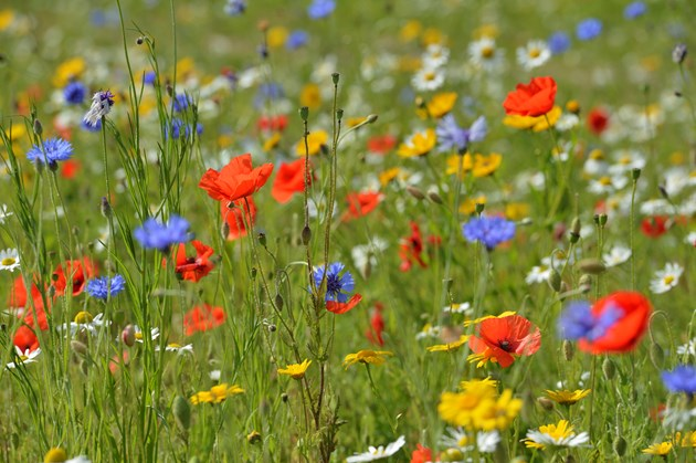 Dunbartonshire biodiversity project awarded £157k Nature Fund cash: Wildflowers-©Lorne Gill