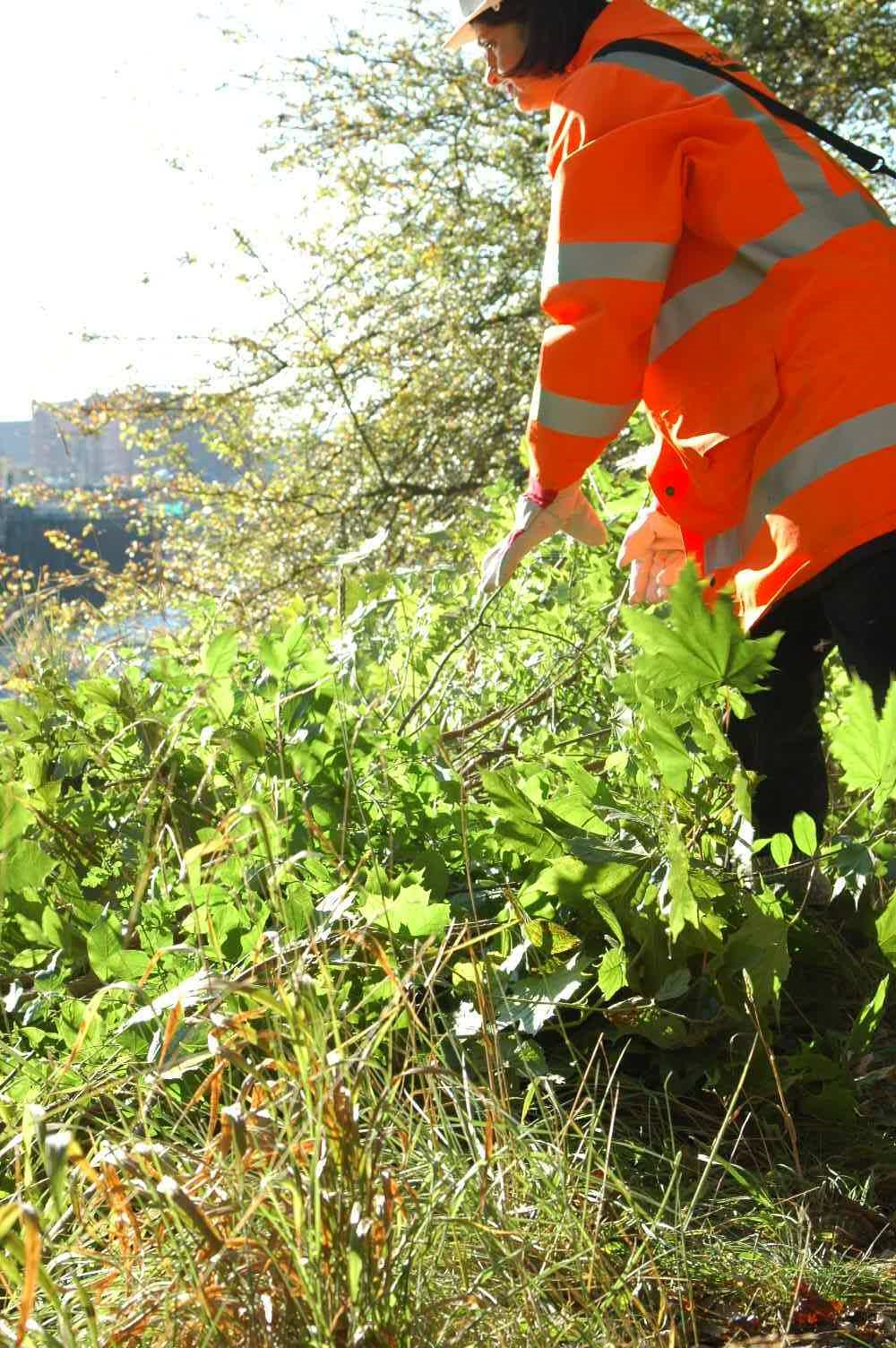 Overgrown vegetation make way for rare plants