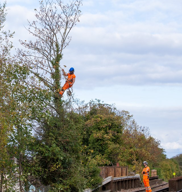tree cutting - Whitstable