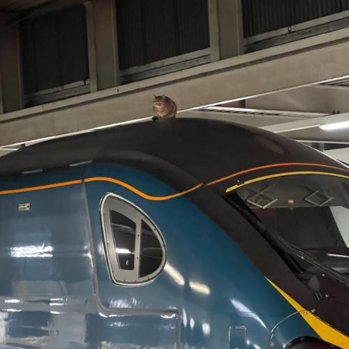 Train surfing cat