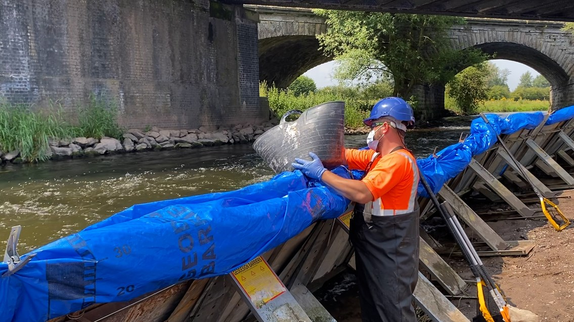 Fish rescued from River Trent during major railway viaduct upgrades: Fish being released back into the River Trent
