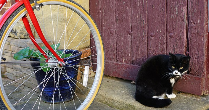 Thwaite at 30: Milly the mill cat, Thwaite's resident feline and chief mouser