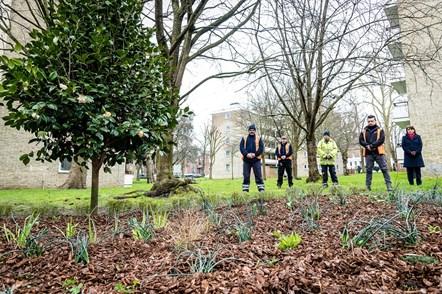 Islington Council staff stand next to a camellia bush in Highbury Quadrant