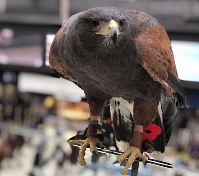 Pigeon patrol takes to the 'skies' of Britain's busiest railway station: Aria at Waterloo cropped