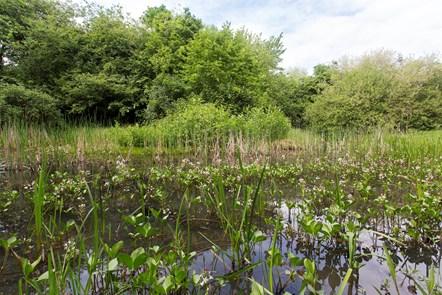 Gillespie Park pond-2