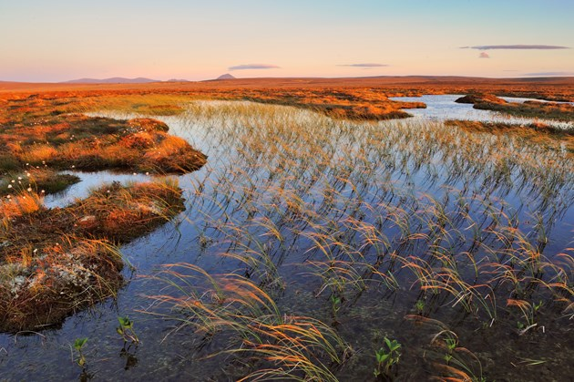New Strategy for the Peatlands of Caithness and Sutherland: Blanket bog at the The Flows National Nature Reserve ©Lorne Gill/NatureScot/2020VISION