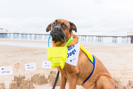 Northern launches canine campaign for coastal exploration: Dogs at Blackpool 10