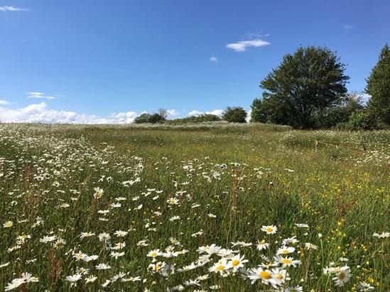 Established ecological mitigation site at Finham Brook, Warwickshire: Credit: HS2 Ltd