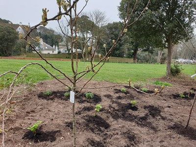 Saga bring employees and local residents together through community garden: Community Garden-5