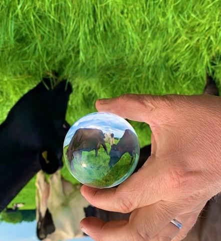 Crystal ball one Credit James Muir, an Arla farmer from Staffordshire  Twitter muirtwit