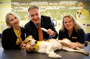 Chip in: Compulsory microchipping for dogs