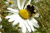 Open letter on greening: Environment-bees-wild-flowers