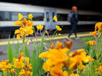 Southeastern station gardens come into bloom, in time for passengers' return: Image 7 - TBW 210519 PinPep 01-3