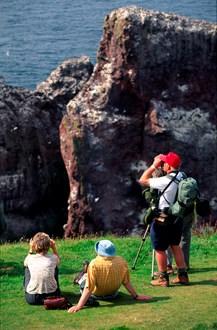 Bird watching at St Abb's Head: Bird watching at St Abb's Head, Scottish Borders. Free use. Credit Lorne Gill/SNH.