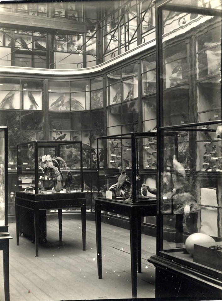 Museum Windows project: Inside Leeds City Museum when it was on Park Row in Leeds. Credit LMG Institutional Archive, Leeds Museum & Galleries
