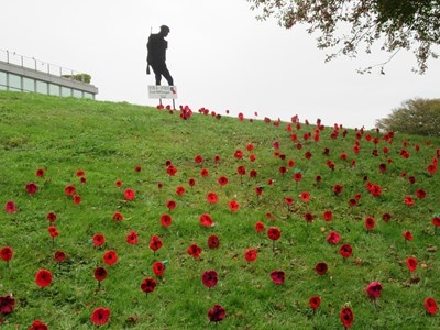 Over 500 hand-knitted poppies by Saga customers displayed at Saga's Headquarters in WWI tribute: IMG 1030
