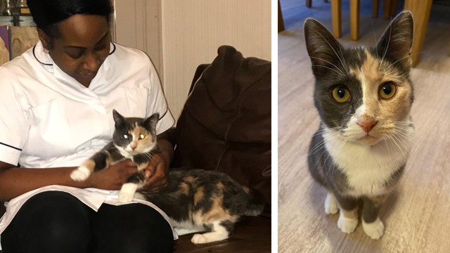 Cat-astrophe averted: missing moggy's Purr-mingham New Street adventure: Chantelle Campbell and Storm reunited
