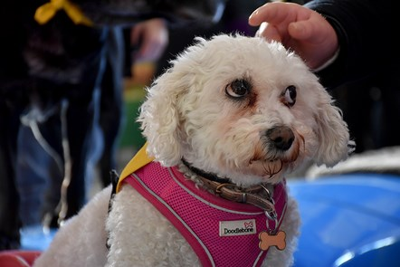 Yorkshire rail users given four-legged fillip by Northern and Pets as Therapy: Pets as therapy 8
