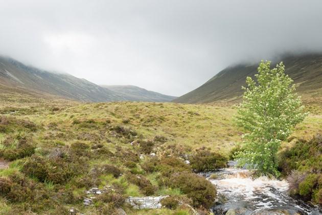 Ben Wyvis - credit Ian Sargent-NatureScot