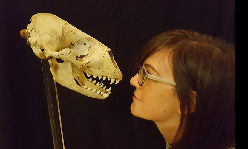 Museum's fearsome new display promises nothing but the tooth: 20170911-113222.jpg