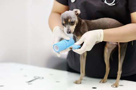 Dog Bandage