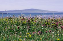 Machair-02 - copyright SNH-Lorne Gill