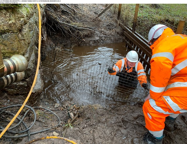 Perthshire Beaver tunnel construction
