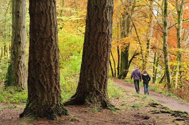 Walkers enjoying woodland at Dunkeld Perthshire ©Lorne Gill/2020VISION