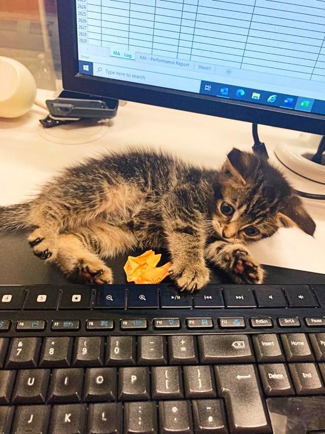 CrossCountry cat 7