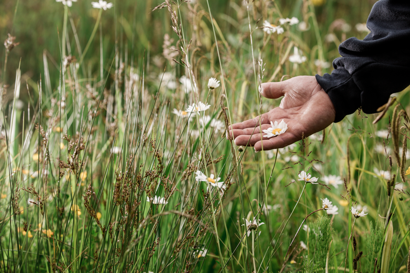 Mitie Landscapes backs No Mow May to support biodiversity