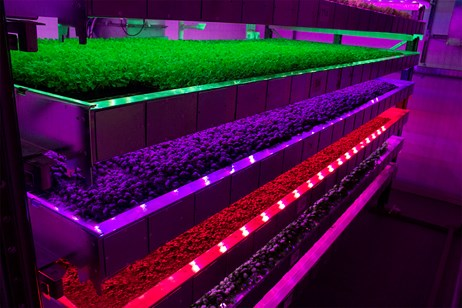 Intelligent Growth Solutions attracts further US AgriTech investment to Scotland: IGS -produce grown in trays 1
