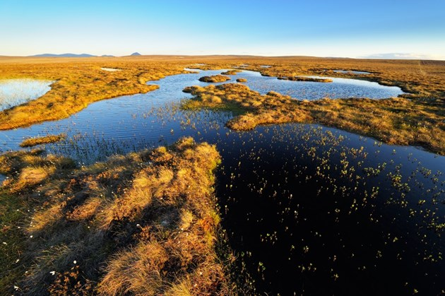 Funding available now to restore Scotland's peatlands: The Flow Country
