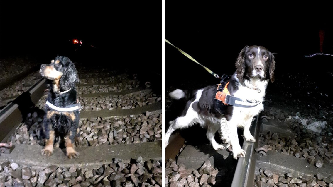 Dogs get sniffin' for newts in Hitchin ahead of vital track improvements: Rocky and Arnie searching for newts in Hitchin
