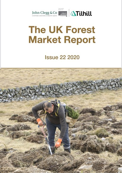 An astonishing year for forestry as values surge: The UK Forest Market Report 2020