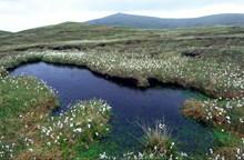 Hermaness National Nature Reserve, Unst, Shetland.Credit Lorne Gill-NatureScot