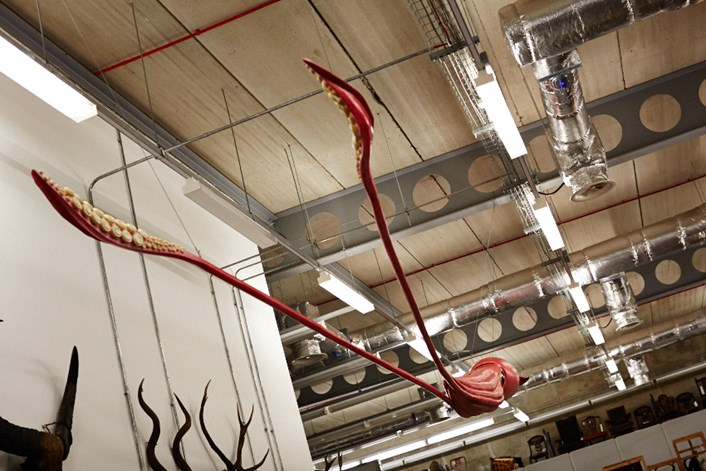 Leeds Museums and Galleries object of the week- Giant squid model: 002b.jpg