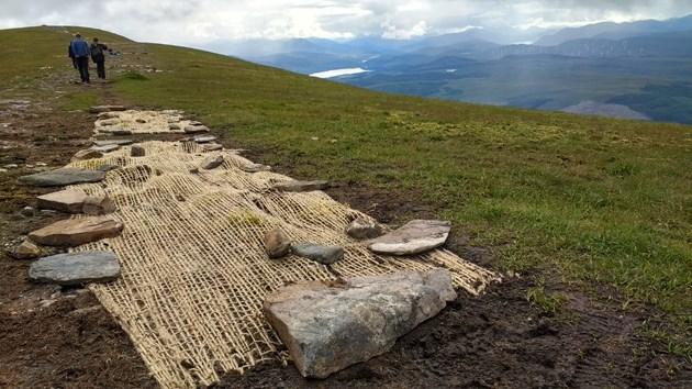 Ben Wyvis NNR Racomitrium stabilisation restoration work - credit NatureScot
