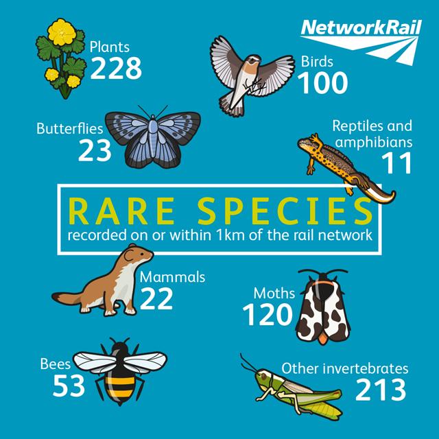 Biodiversity-rare-species-full-01