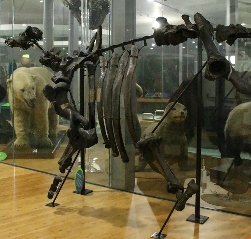 Leeds Museums and Galleries object of the week- The Armley hippo: ah.jpg