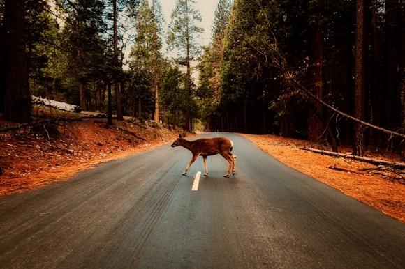 Be #deeraware and stay safe on rural roads: Deer 1