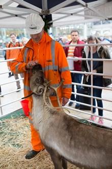 Reindeer-11