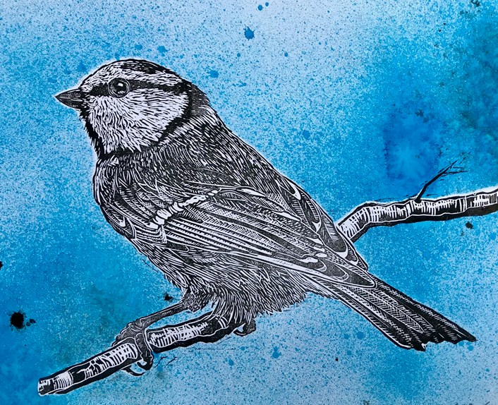 Birdwatching partnership: Lino print of a blue tit which is part of the art packs being sent to members of the group.