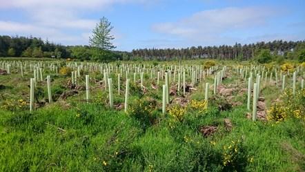 compensatory planting