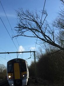Fallen tree hits overhead wires at Roydon: ORBIS