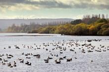 Loch Leven-D9585 - Credit SNH-Lorne Gill-2