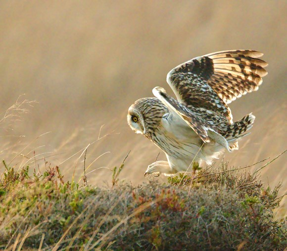 SEO pouncing on a small rodent - Copyright Ron Macdonald