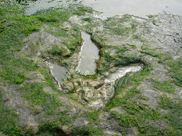 Dinosaur sites on Skye to be given official protection: An Corran - GCR site - NCO - Image of dinosaur footprint credit Colin MacFadyen SNH