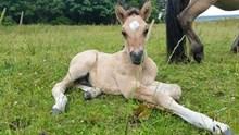 Colt foal