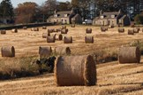 Cereal harvest cheer: Agriculture-cereal-crop-farming-straw-bales-stubble-field